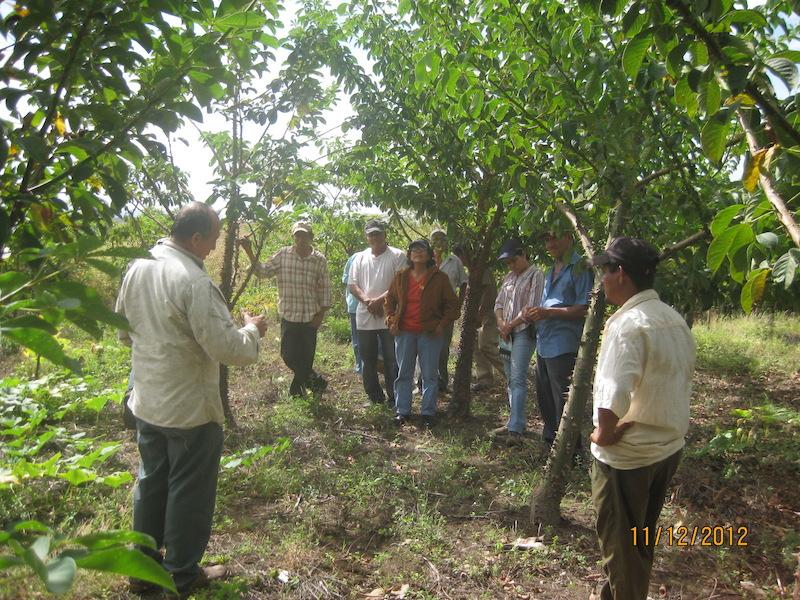 Capaciteitsopbouw voor de producenten van het klimaatbos in Leon