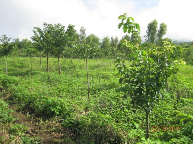 Jonge bomen, klimaatbos Leon