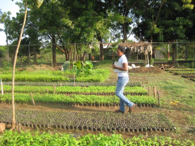 De kwekerij, klimaatbos Leon