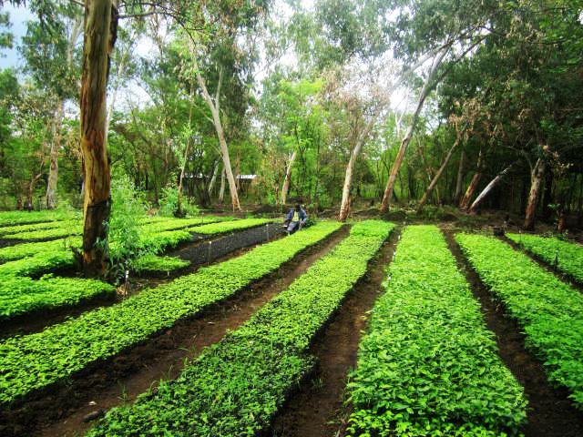De kwekerij van het project klimaatbos Leon