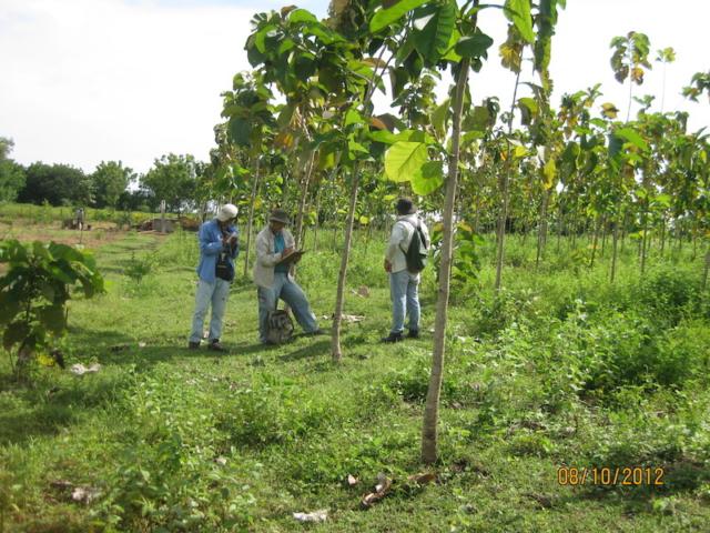 Monitoring van het project klimaatbos Leon