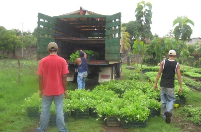 Jonge planten worden verplaatst naar het land, klimaatbos Leon